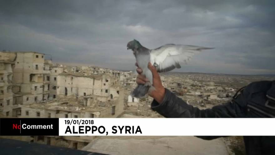 Las palomas vuelven a Alepo