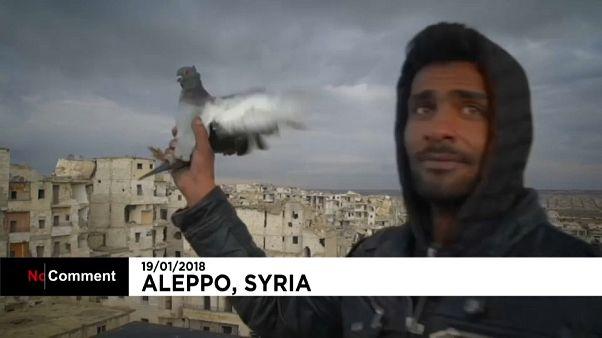 وسط أهوال الحرب.. جندي سوري يتخذ من تربية الحمام متنفسا