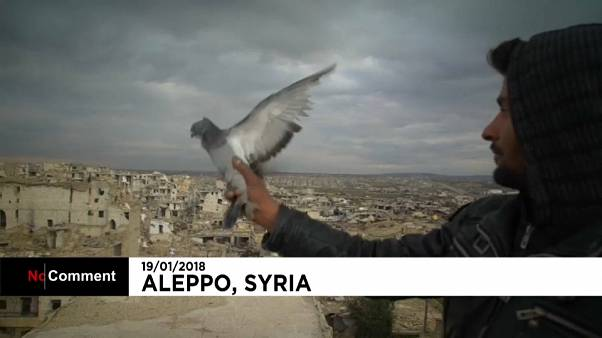 Syrian soldier spends his downtime breeding pigeons in Aleppo