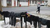 Flüchtlinge: Serbien will sich an EU-Quote anpassen
