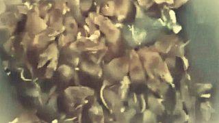 صدها موش در یک سطل زباله در پاریس «له شدند»