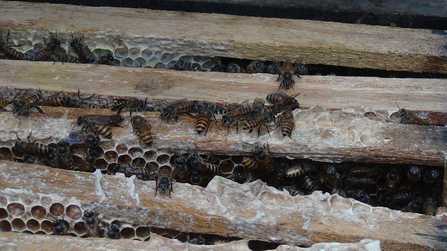 Les eurodéputés au chevet de l'apiculture