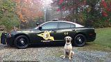 Ein Polizeihund sitzt vor einem Einsatzwagen in den USA