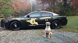 جمعية كلاب شرطة نيو هامبشاير - فيسبوك