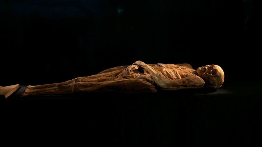 Найден мумифицированный предок Джонсона