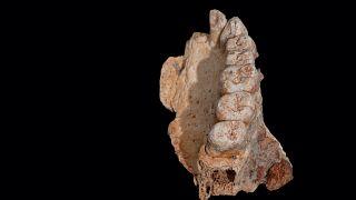 Homo Sapiens δεκάδων χιλιάδων ετών, και η μετανάστευση από την Αφρική