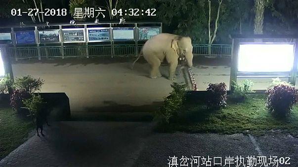 Wild elephant makes illegal border crossing