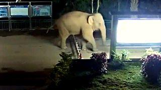 فیل بازیگوش مرزهای چین و لائوس را درنوردید