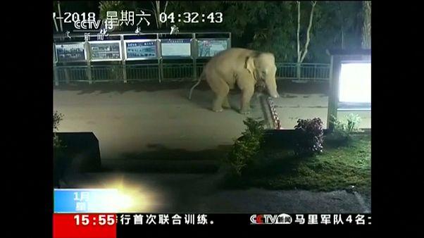 Sınır tanımayan fil