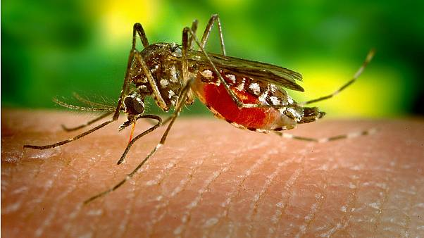 You can train mosquitos not to bite you by swatting them, finds new research