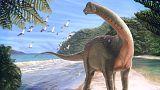 Σπάνιο απολίθωμα δεινοσαύρου με διαστάσεις λεωφορείου