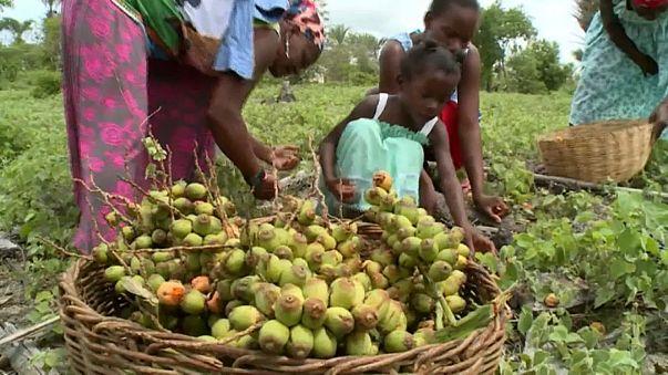 Vegetação nativa combate seca na Bahia