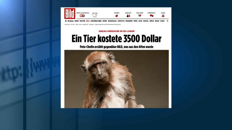 İnsanlar ve maymunlar üzerinde deney skandalı