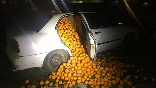Spanish police catch fruit thieves red-handed in orange heist