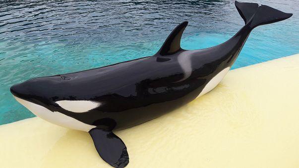 """Ecco Wikie, l'orca che saluta con un """"Hello"""""""