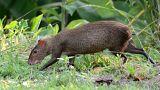 فأر يستحم بالماء والصابون!