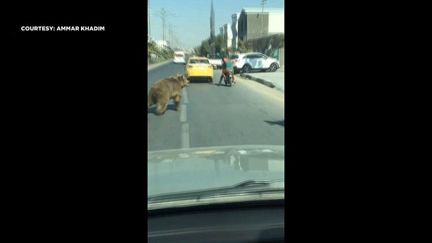 Bär läuft in den Straßen von Basra herum
