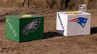 Már gyülekeznek a drukkerek a Super Bowl helyszínén