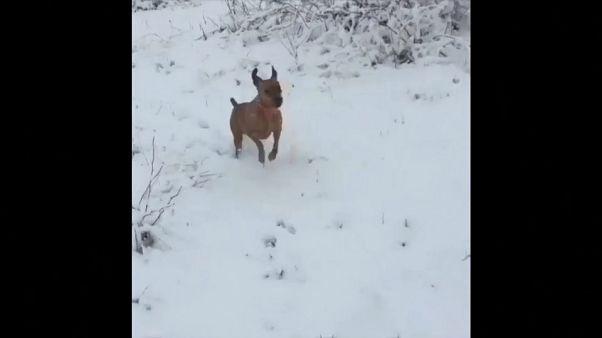 Un frío de perros