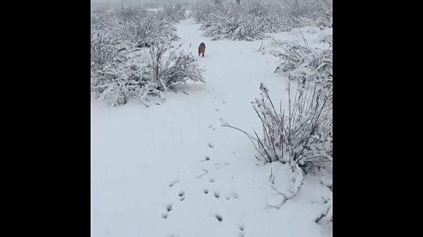Hundskälte: Madrid im Schnee