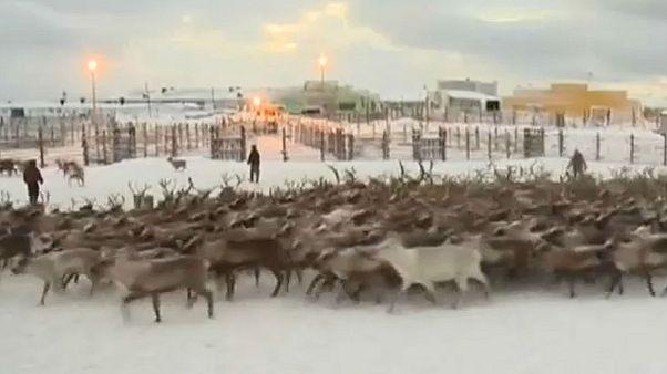 Sami halkı (Laponlar) Uluslararası Sami Günü'nü kutladı