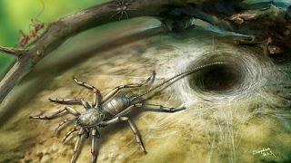 اكتشاف نوع من العناكب المنقرضة لها ذيل داخل قطع من الكهرمان