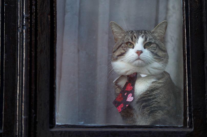 Il gatto di Assange si specchia nella finestra dell'ambasciata
