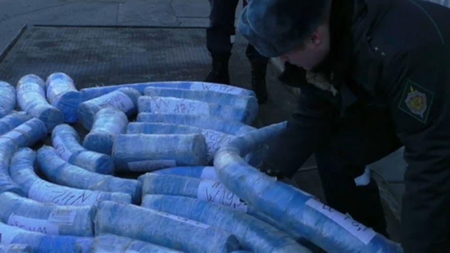 Russland: Schmuggel mit Mammutstoßzähnen aufgedeckt