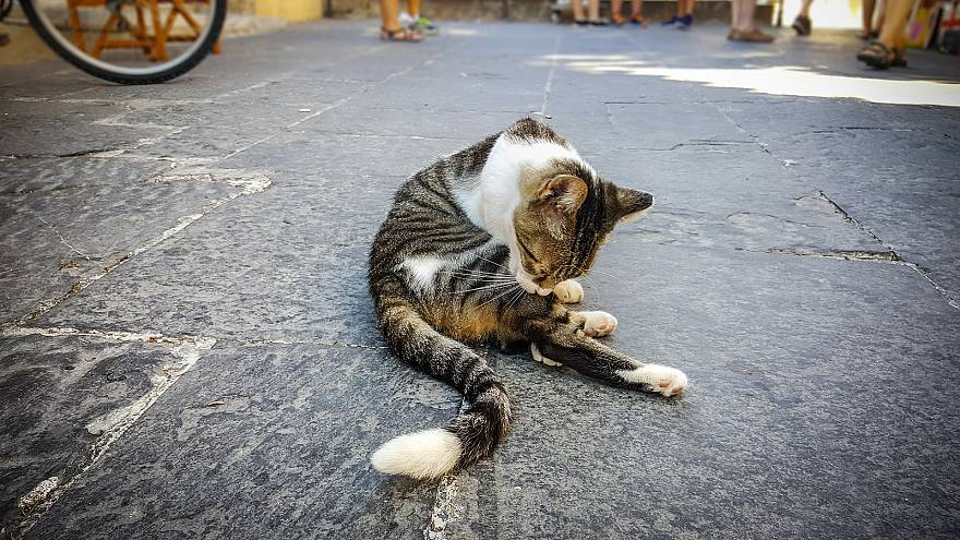 Belgium Sterilizing Cats