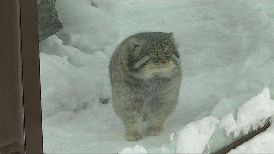 Зимовка в зоопарке