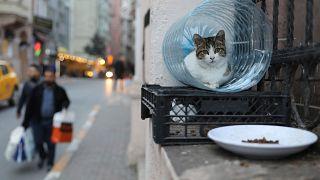 Istanbul: Stadt der Katzen - in 10 Fotos