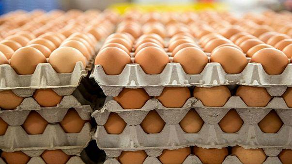 الوفد النرويجي المشارك في أولمبياد بيونغ شانغ يتلقي 15 ألف بيضة بالخطأ