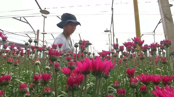 Mão-de-obra venezuelana no negócio das flores
