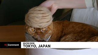 Macskák Donald Trump frizurájával