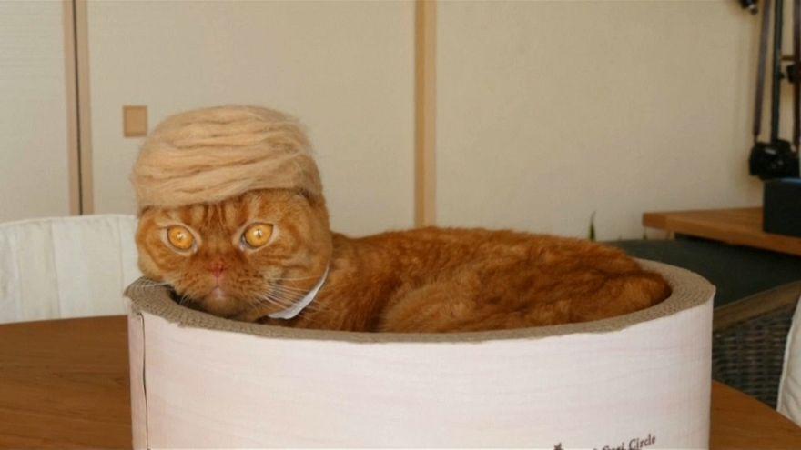 Un sombrero de pelos para los gatos