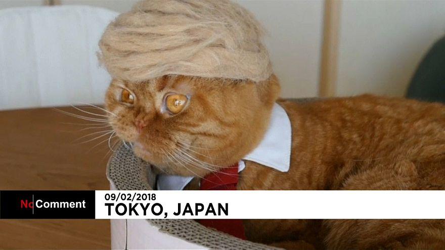 I copricapo per gatti dell'artista Yamazaki