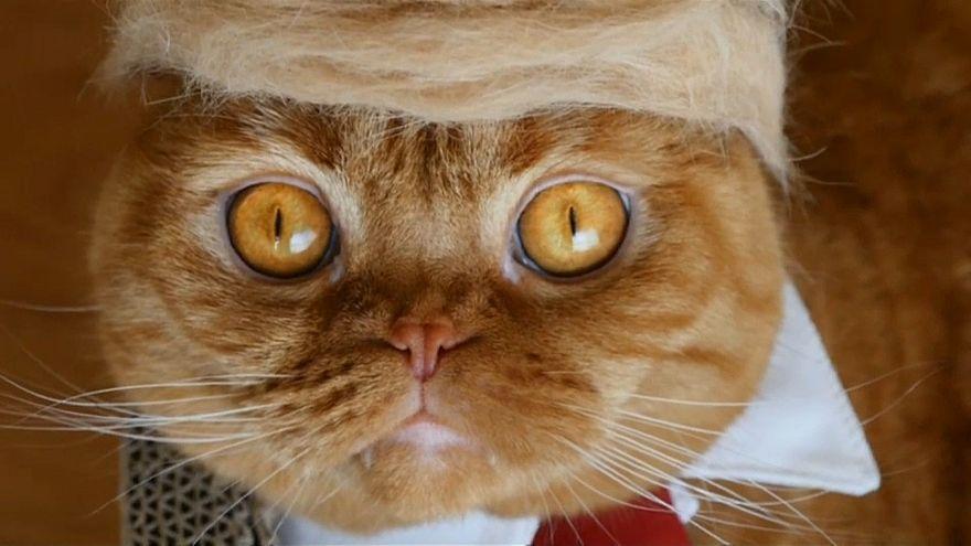Trumps Tolle aus Katzenhaar