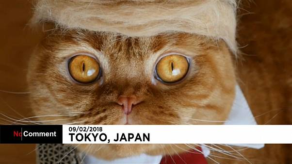 Dökülen tüylerle #trumpyourcat