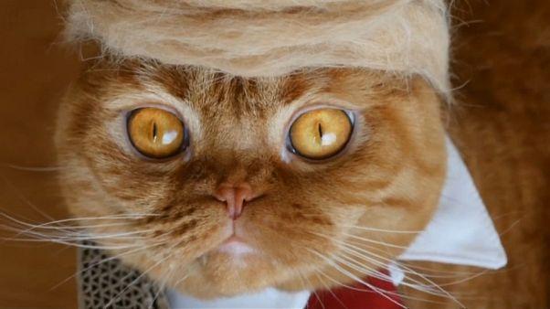 شاهد.. باروكات على شكل تسريحة ترامب من شعر القطط