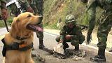 Doble atentado sin víctimas del ELN en Colombia