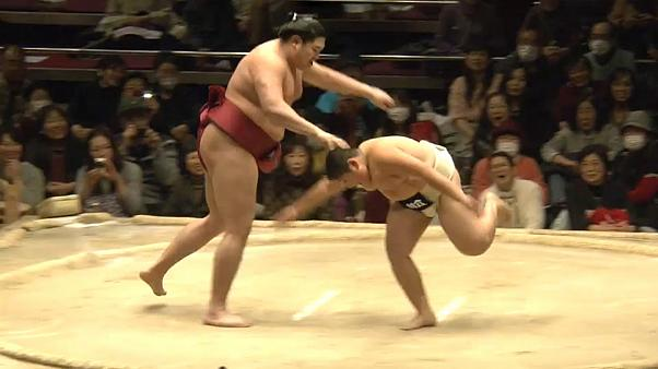 Sumo wrestling: children VS champs