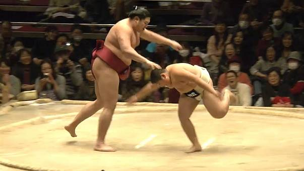 Sumo wrestling: children VS champs