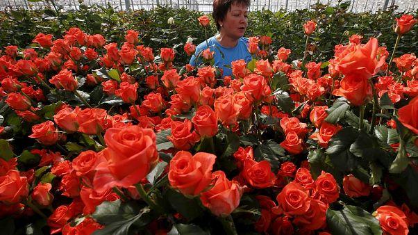В Россию с любовью: куда ЕС продаёт свои розы?