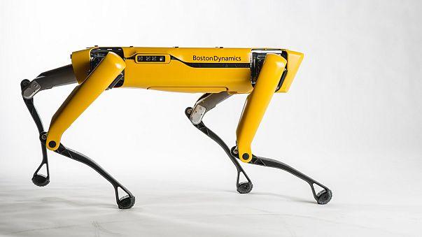 Un robot de Boston llama a tu puerta