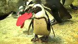Kalifornien: Ein Herz für Pinguine