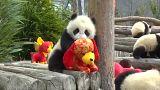 Pandalardan yeni yıl kutlaması