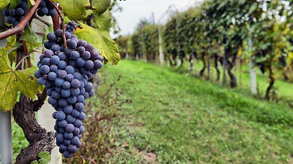 Ιταλία: Εξαγωγές ρεκόρ για το Prosecco