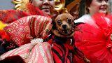 Lo que necesitas saber sobre 2018 el año chino del Perro