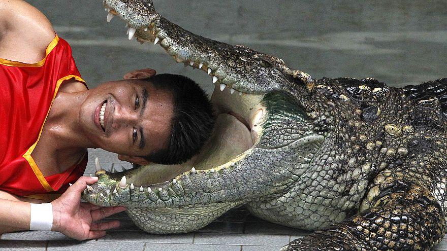 Lelőtte a 100 éves krokodilt, a végén még őt büntették meg