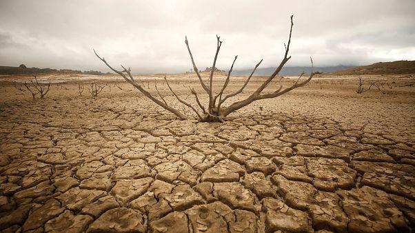 Güney Afrika'daki kuraklık kritik seviyesini sürdürüyor